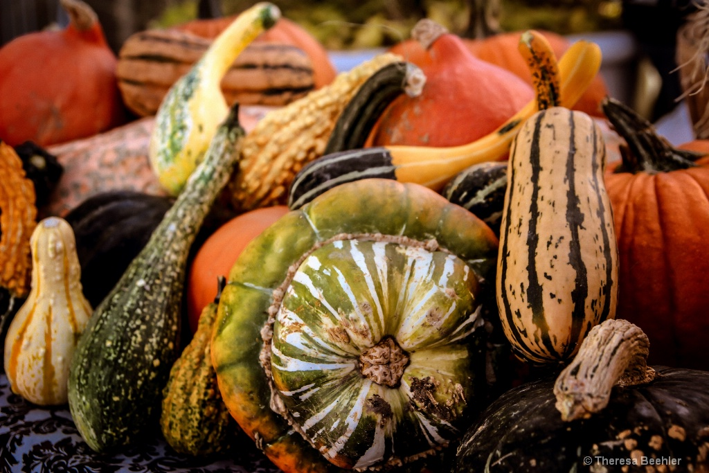 Pumpkins - Fall Bounty 2