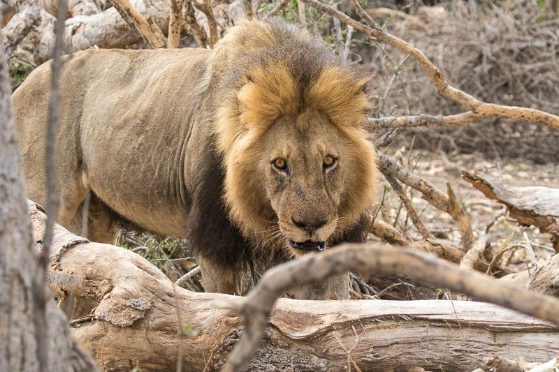Mala Mala - He Got Tired of Her Poaching