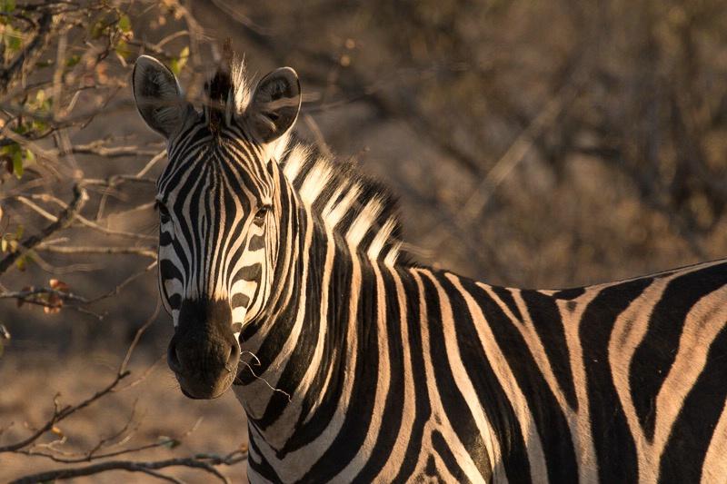 Hamilton's Camp in Kruger Park