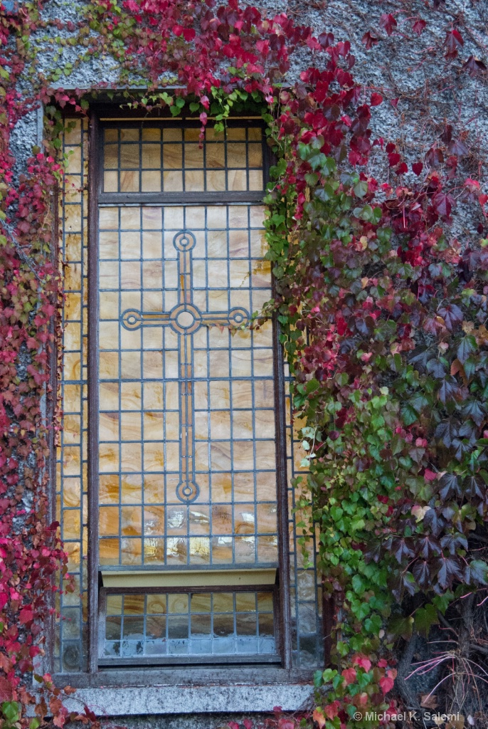 Ivy at Maynooth College