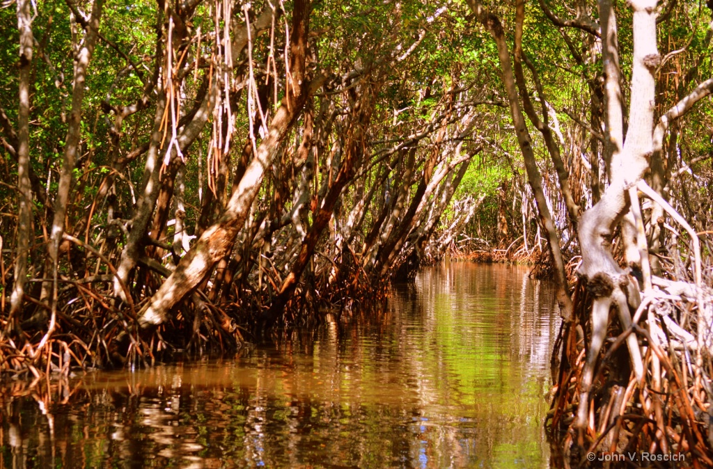 TREES OF THE EVERGLADES