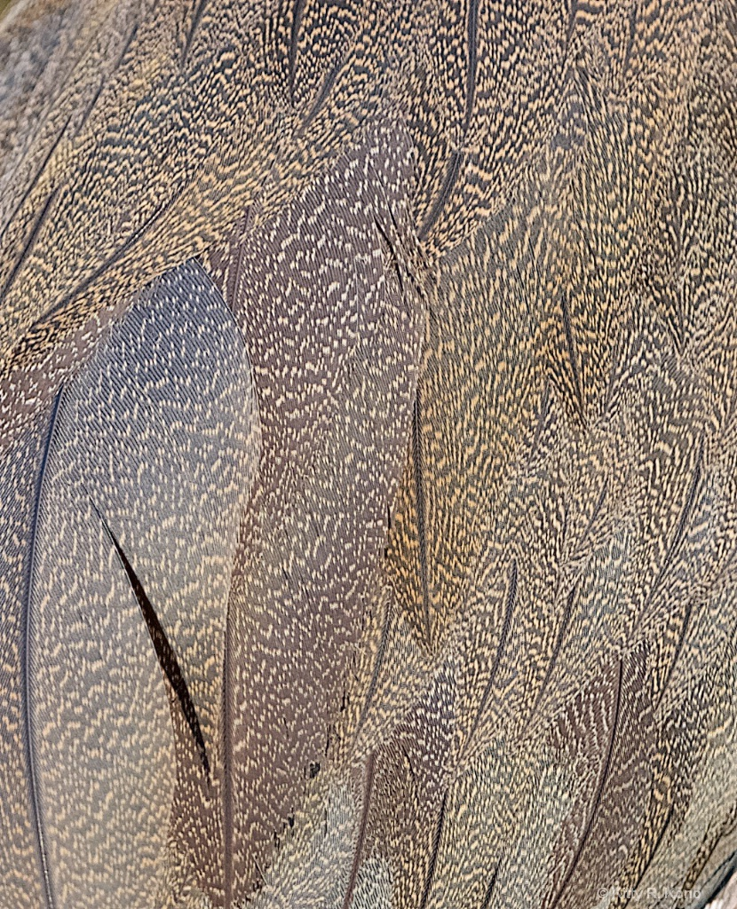 Tiger Heron Wing Pattern