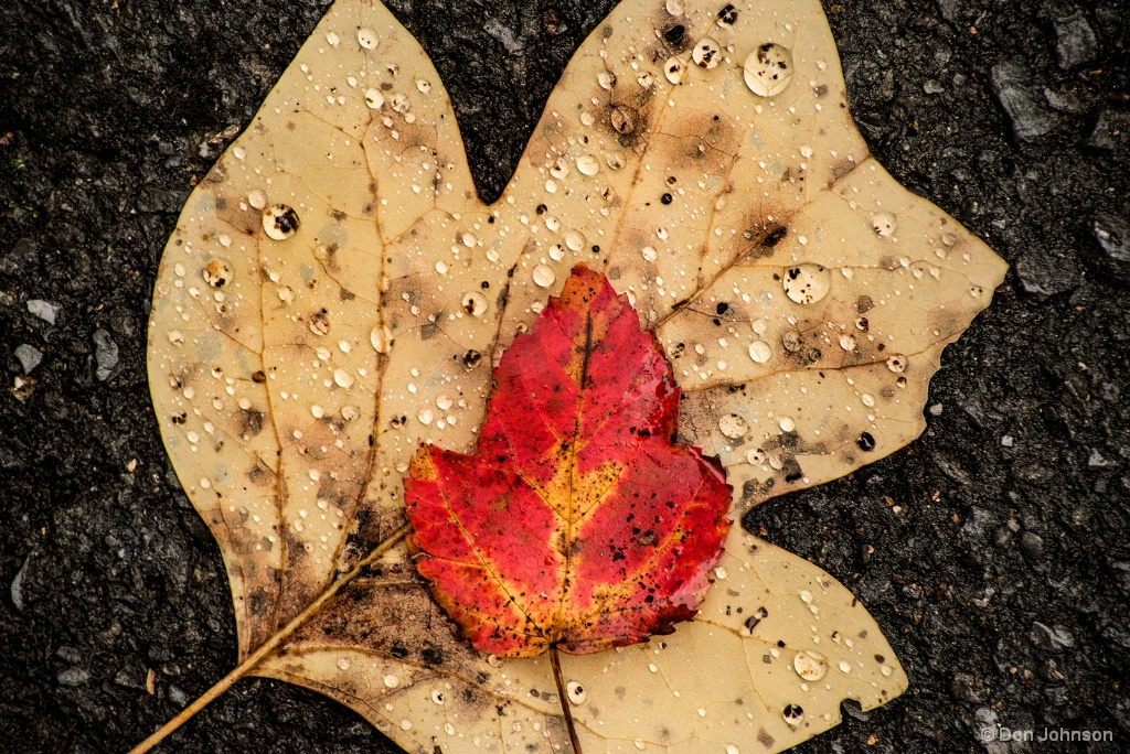 Leaves of Fall 11-2-17 025