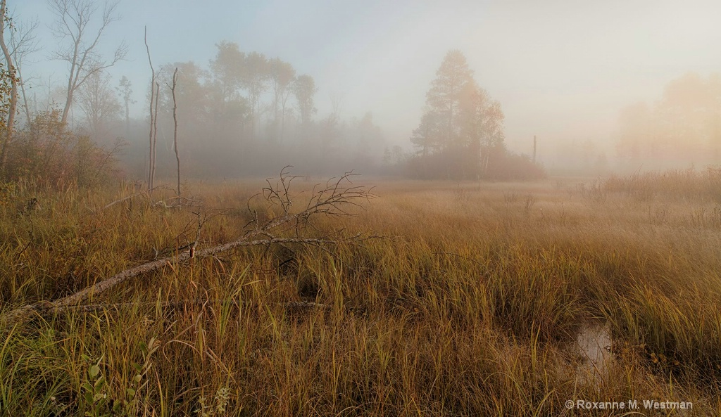 Paul Bunyan state forest on a foggy morning