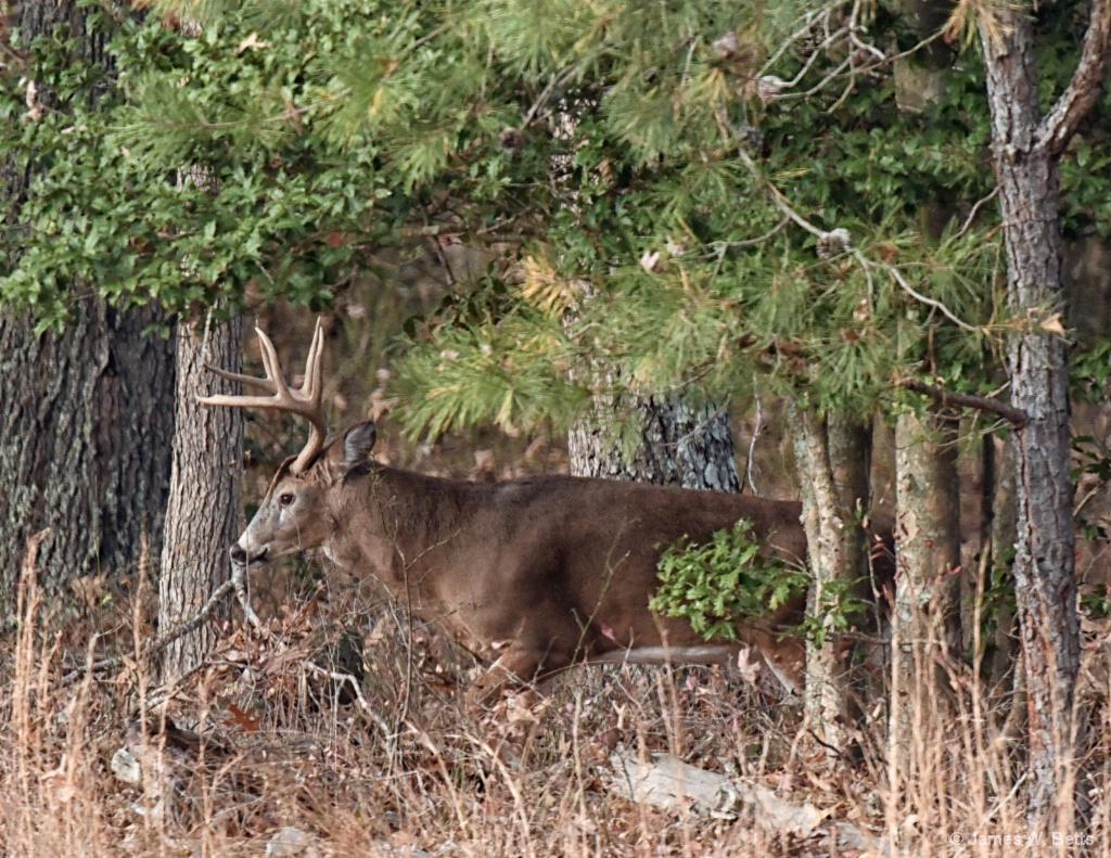 Farm Buck
