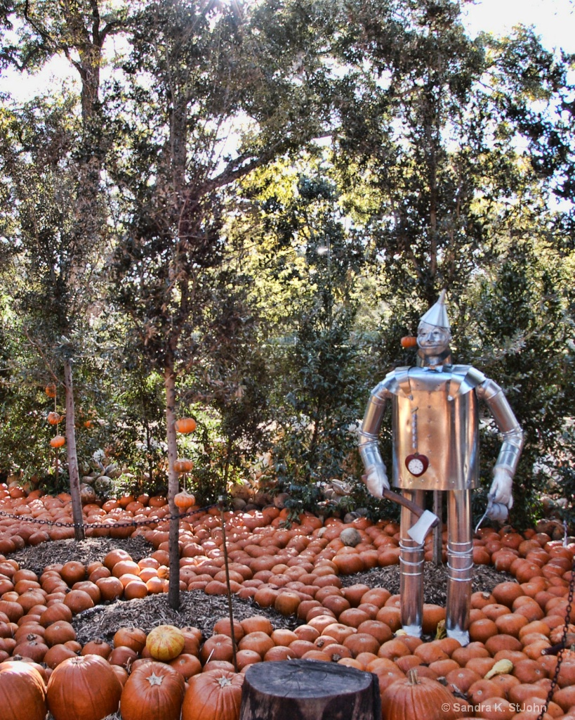 Tin Man in the Trees