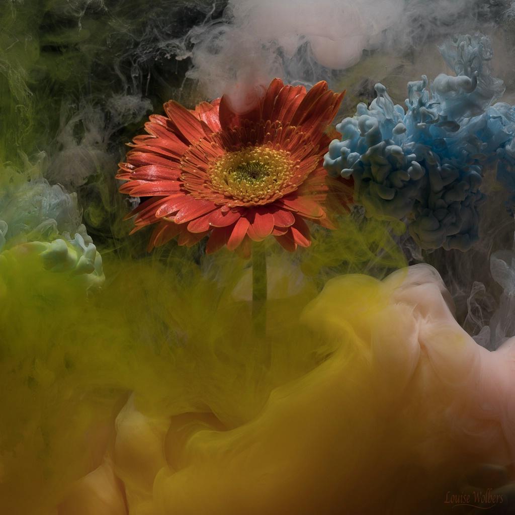 Stormy Flower