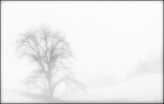 alone in the mist 1