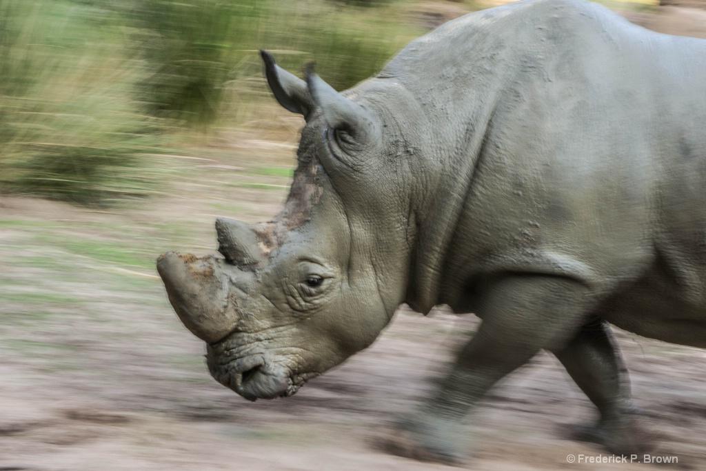 Rino on the Run