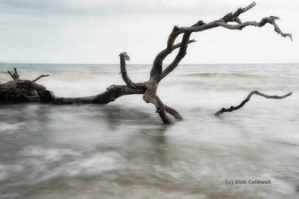 Driftwood Beach,Jekyll Island, GA-by Dick Caldwell