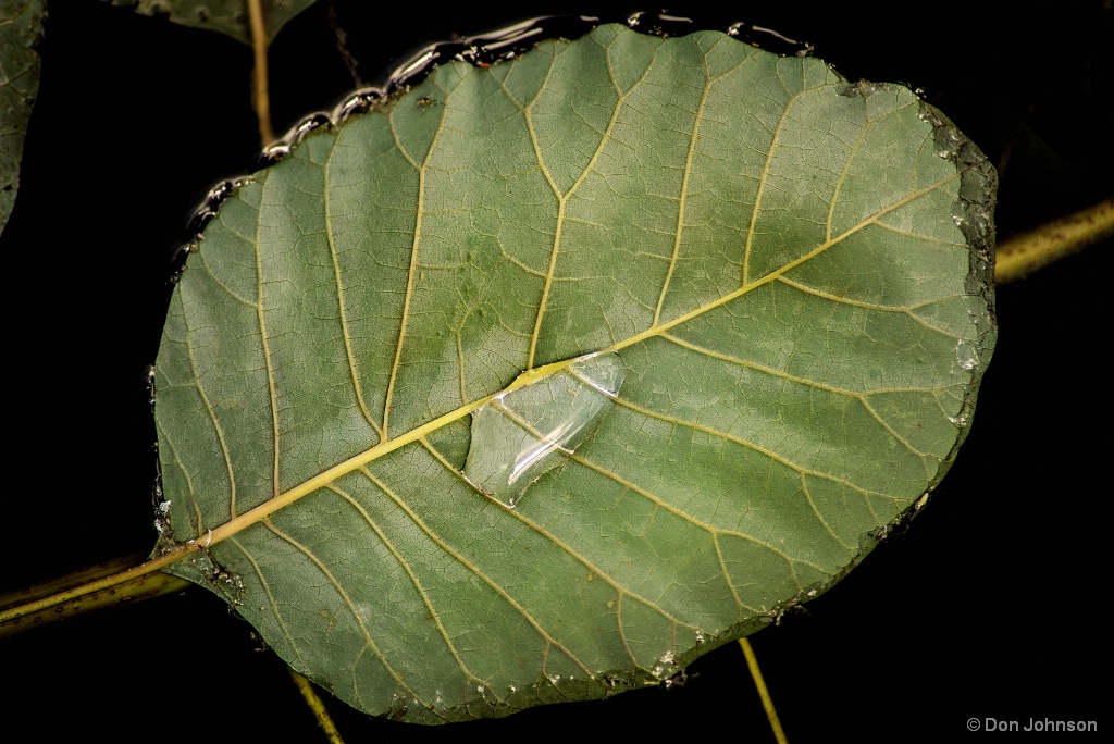 Leaf and Water 6-8-17 295