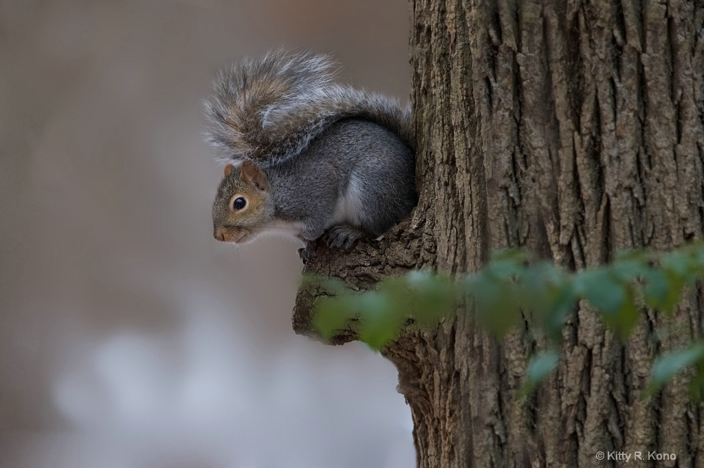 Squirrel on the Notch