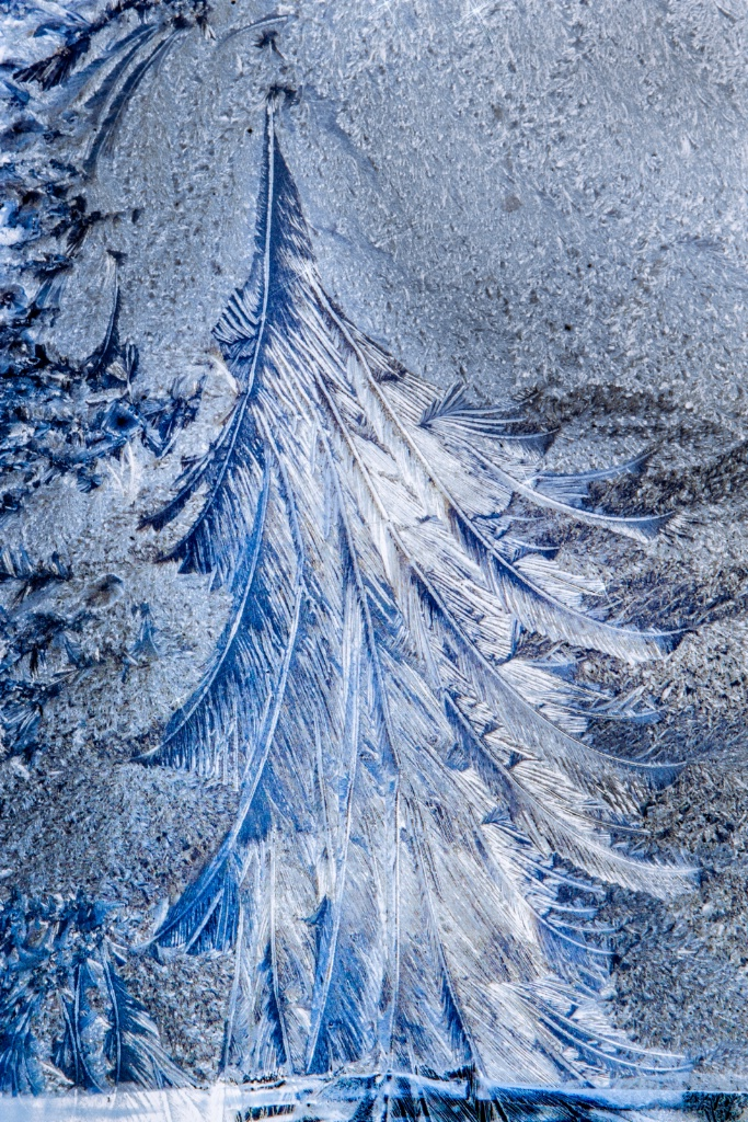 Christmas Tree in Frost