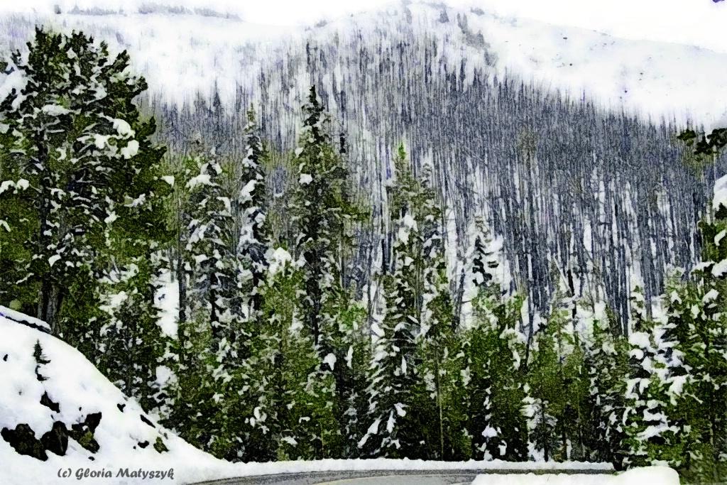 Snow in Mt Washburn, Yellowstone, Montana USA