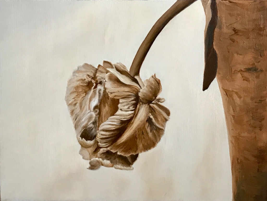 Rembrandt Tulip in Vase in Sepia Currently