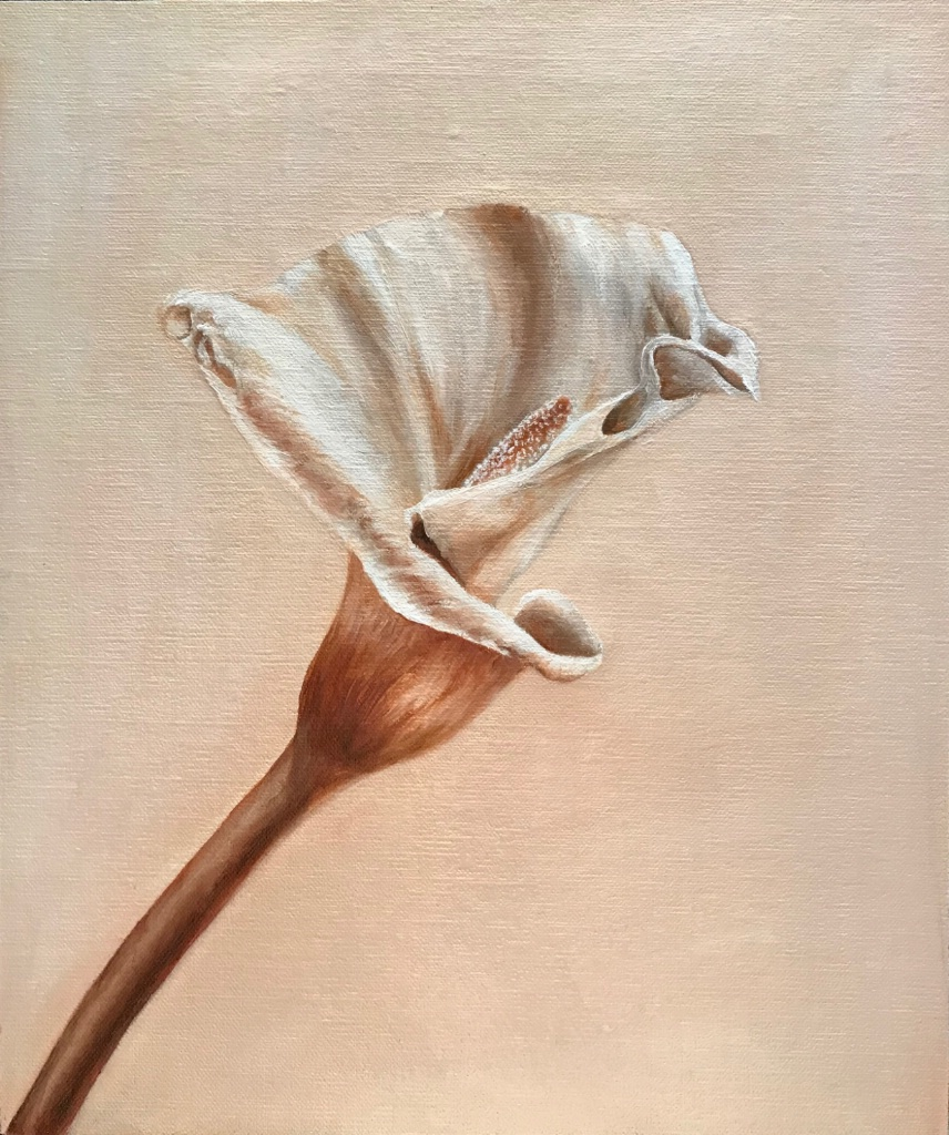 Lily in Sepia $700