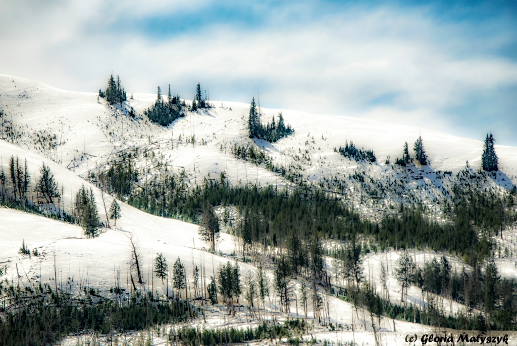 Yellowstone snow, trees and hills