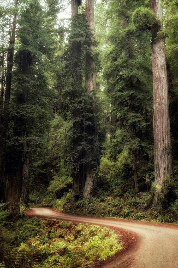 Dwarfed Road II