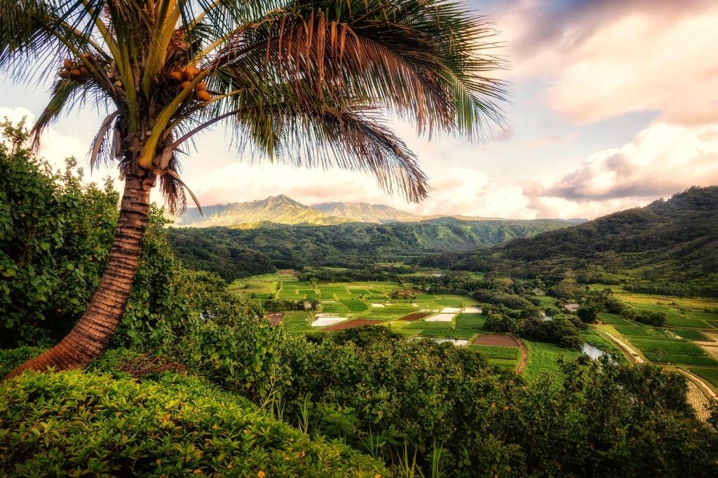Tropical Overlook