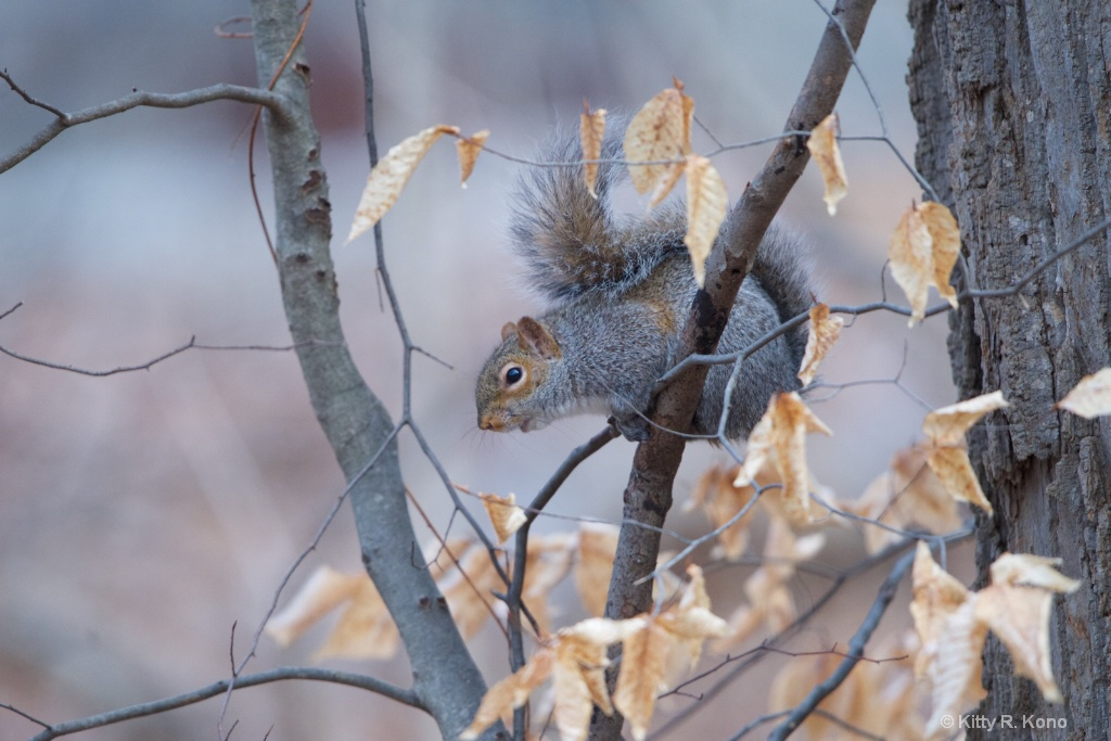 Squirrel Singing in the Leaves