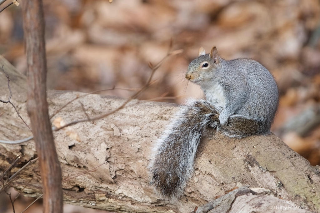 The Subtlety Smiling Squirrel
