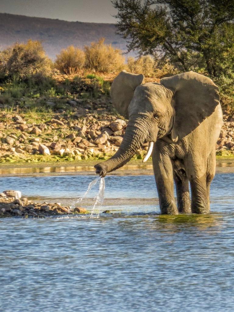 Elephant kid at play