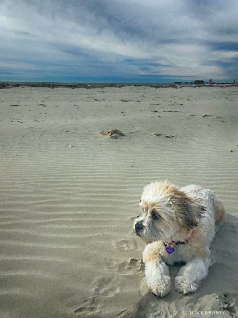 Jenny's First Day at the Beach