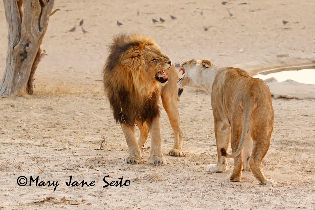 Disagreemet between Lovers, South Africa