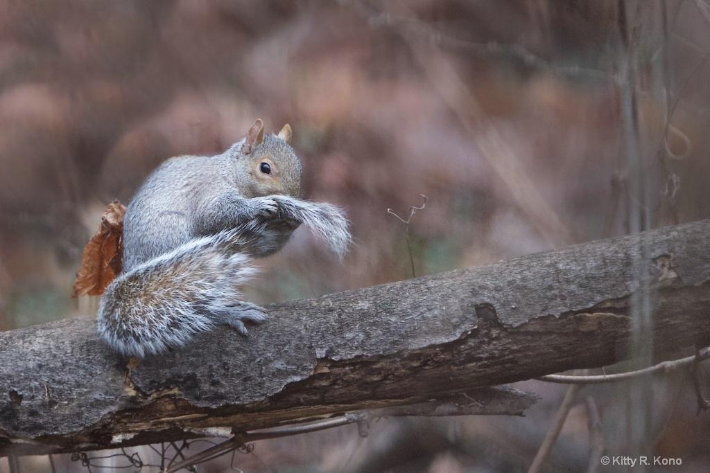 Squirrel Kleenex
