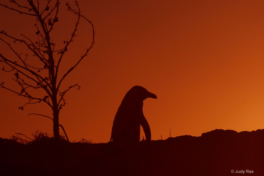 Penguin Sunset