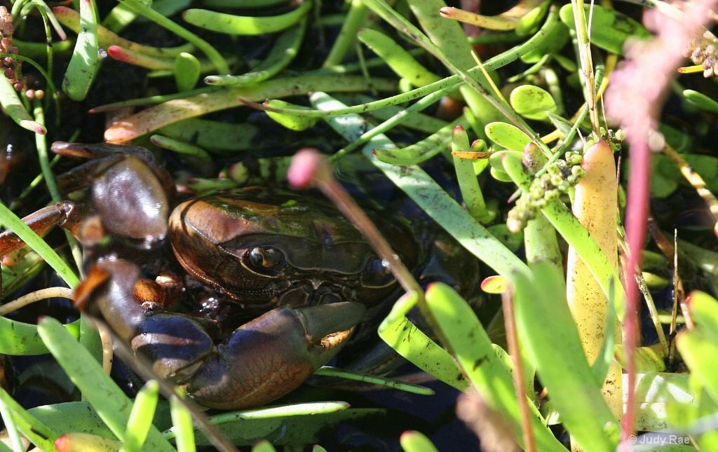 Crab Grass (:
