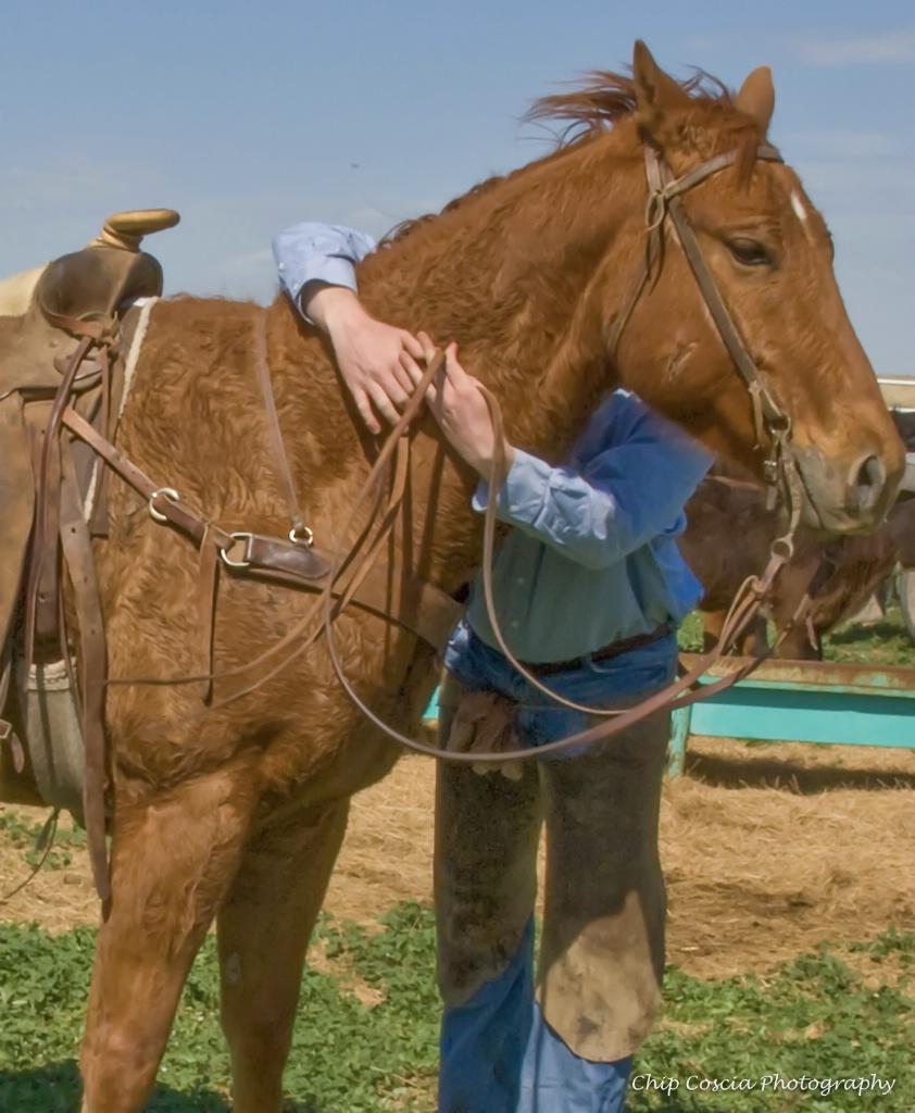 Cowboy's Best Friend