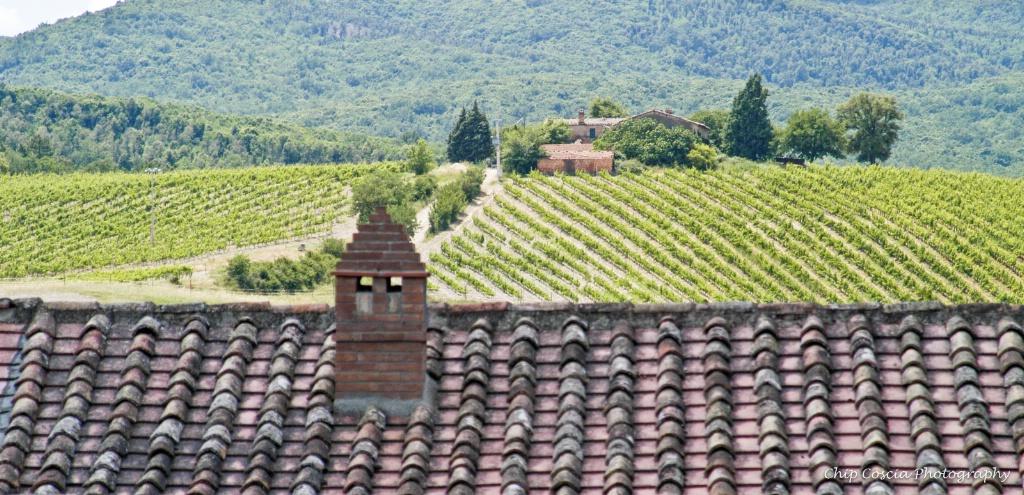 Pastoral Tuscany
