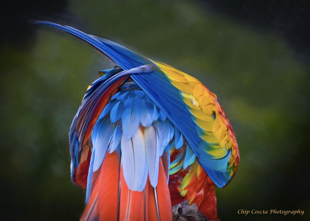 Parrot, Rainbow Colors