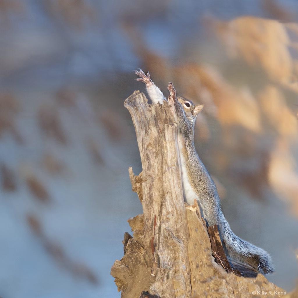 Evangelical Squirrel