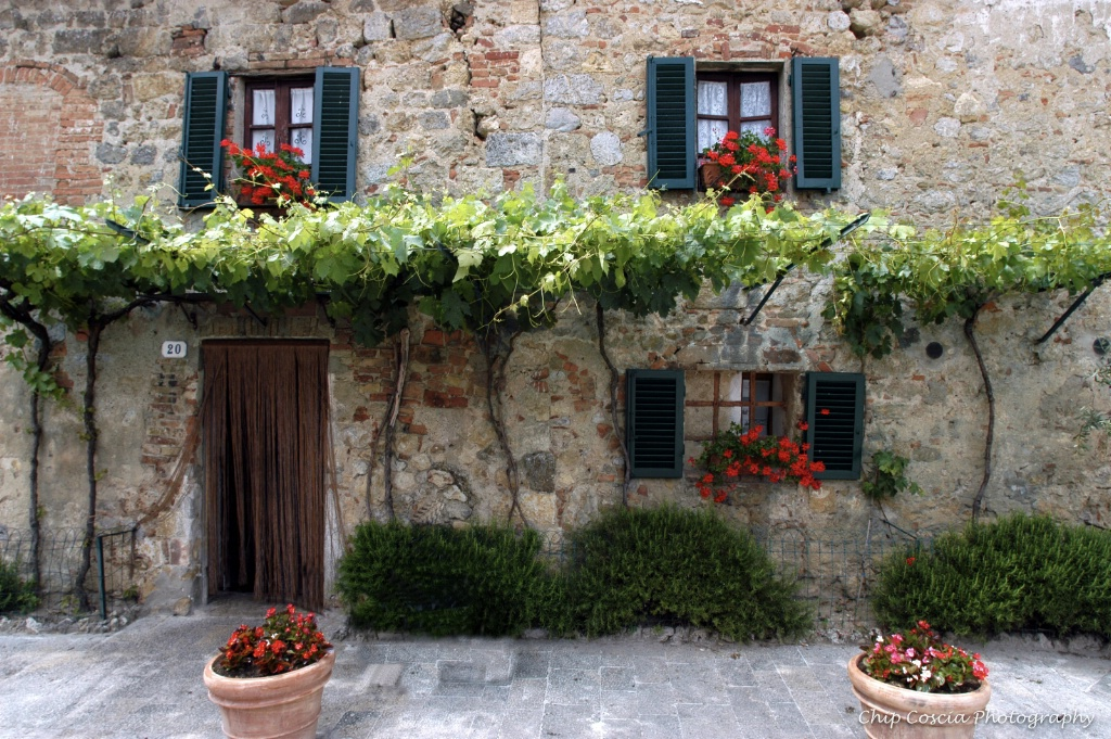 Wall, Vines, Geraniums