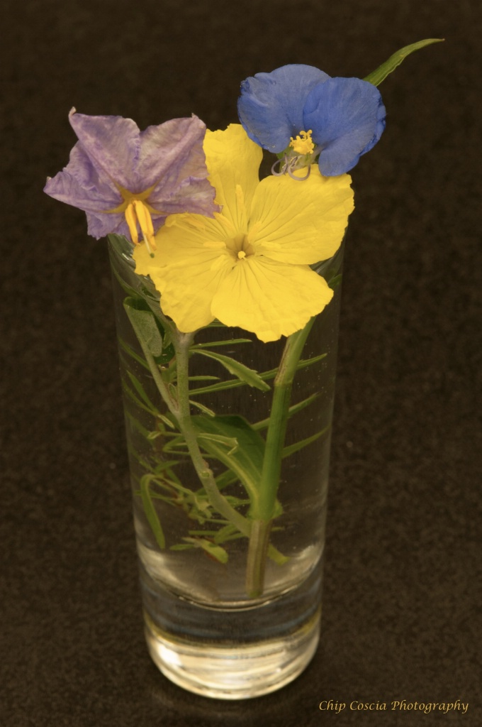 Three Wildflowers In A Glass