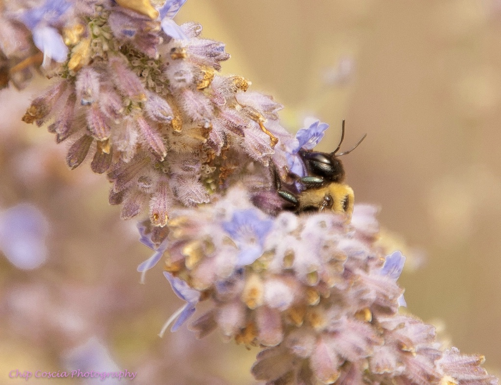 Bee Savoring The Pollen