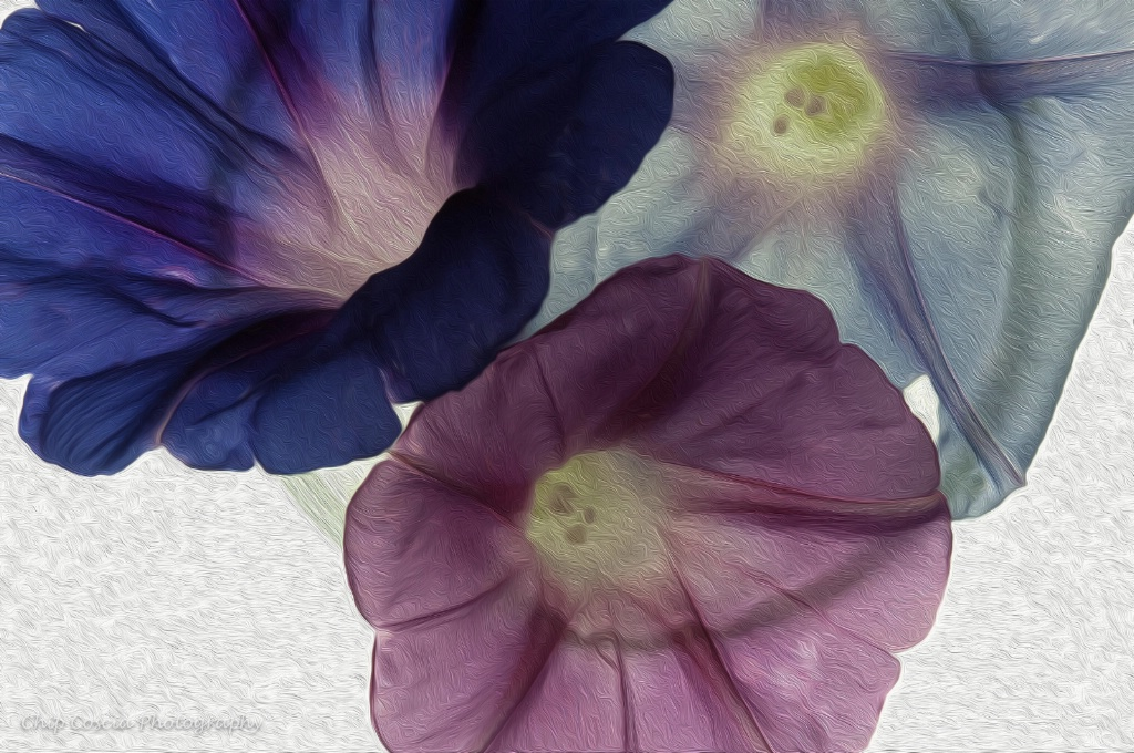 Morning Glories #1