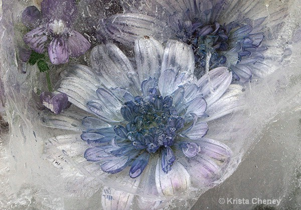 Blue flower in ice II