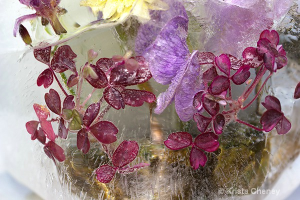 Oxalis and sweet pea in ice II