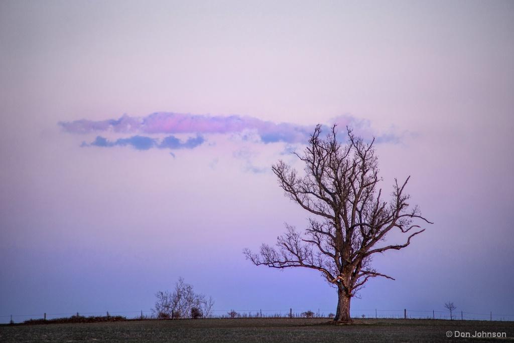 Winter Tree at Sunset 3-10-18 100