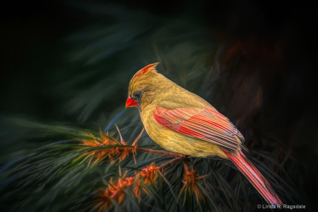 Female Cardinal in pines