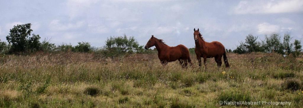 Hiawatha and Tecumseh