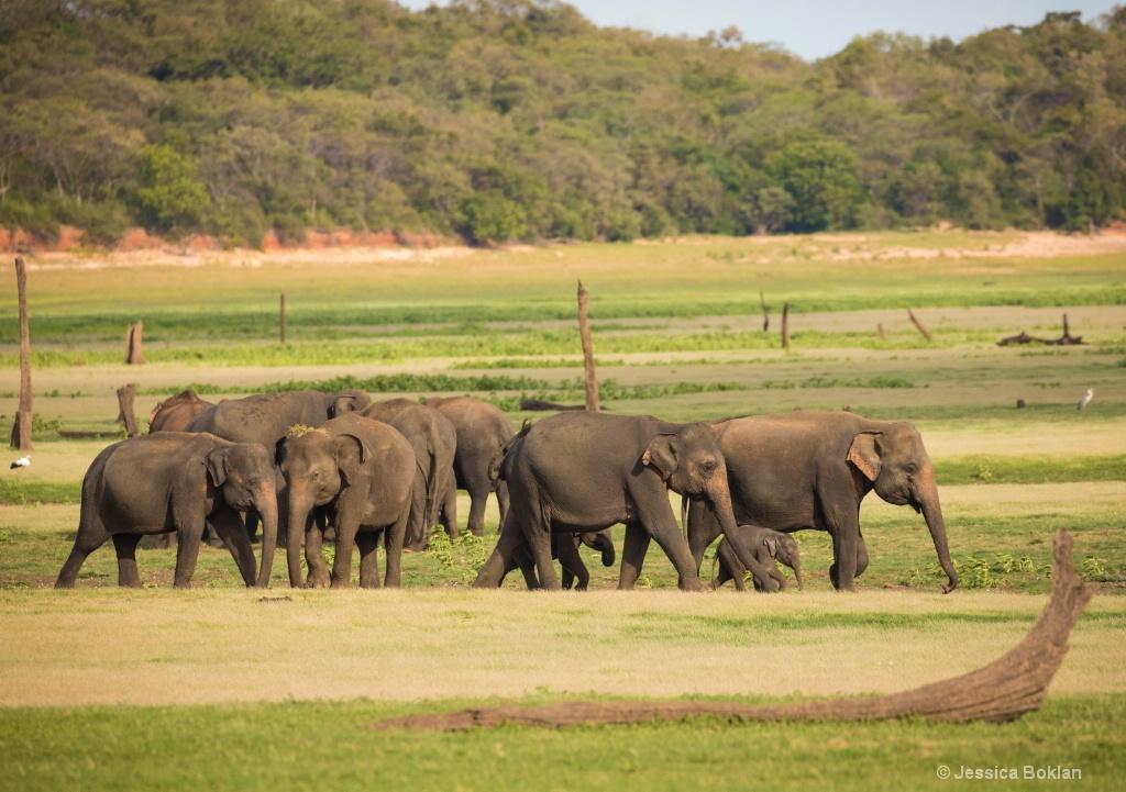 The Elephant Gathering
