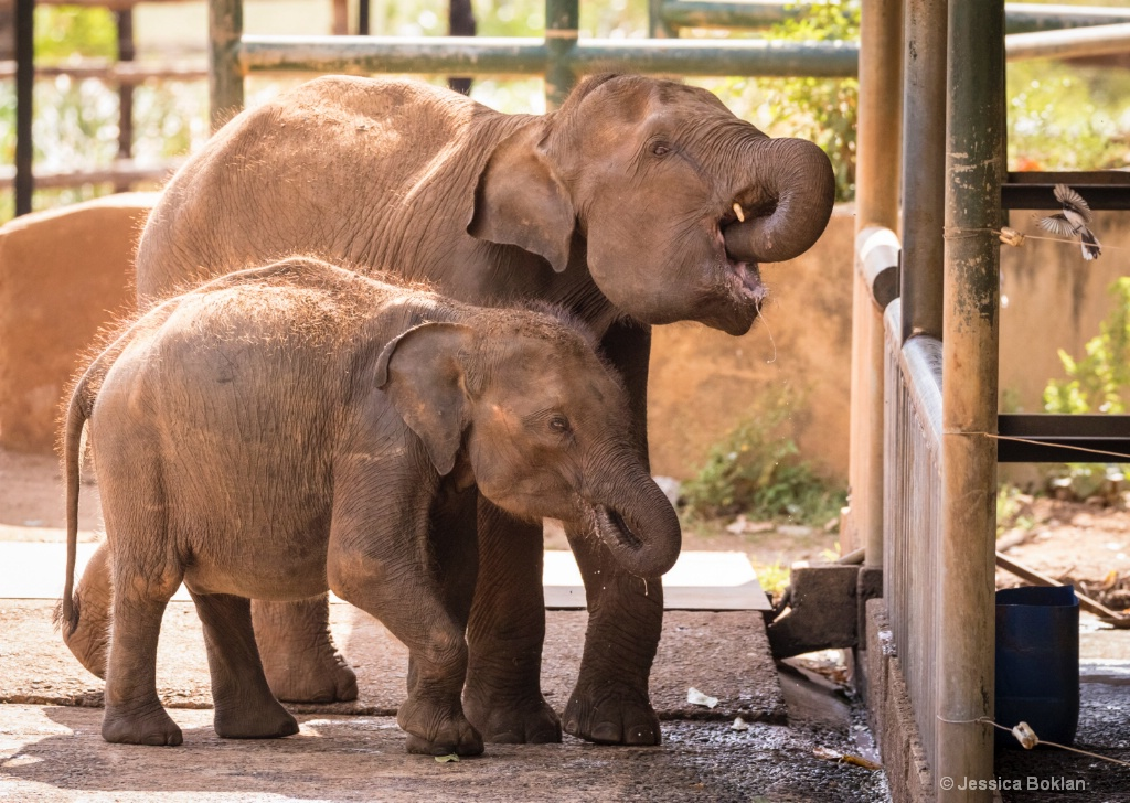 Future Tusker with Drinking Buddy