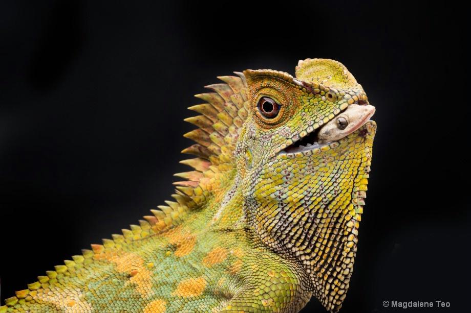 Macro - Lizard with Prey