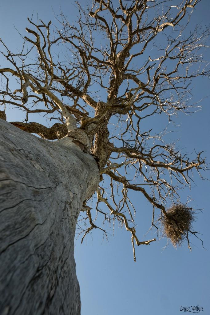 Nesting Above