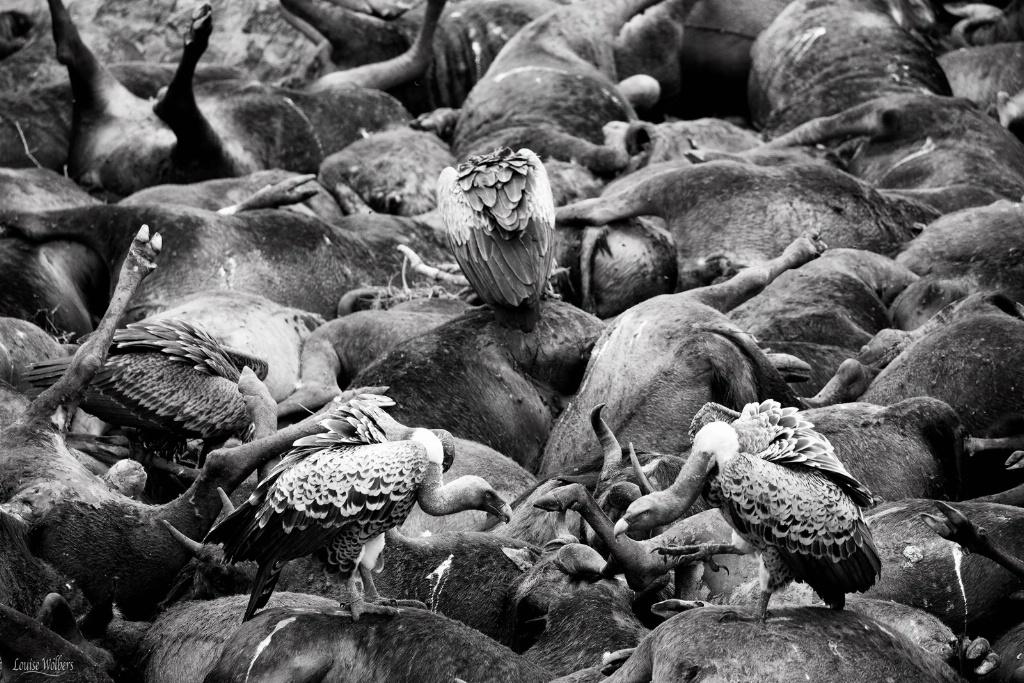 Death In The Mara