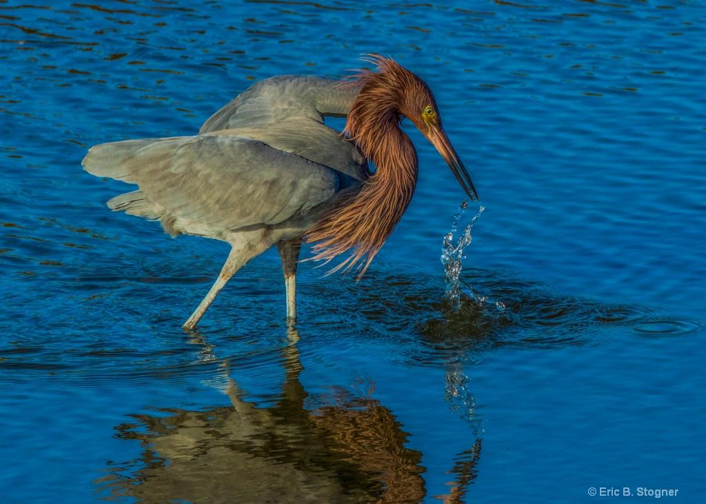 Beak and Splash.